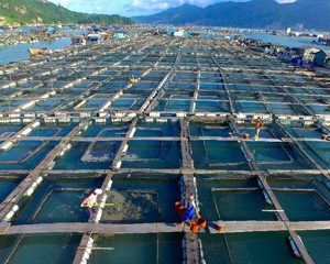 China Announces First Mariculture-solar Installation