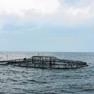 Taiwan Hikes Import Of Aquaculture Products From PH