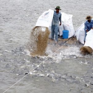Mekong Delta: Adapt To Saltwater Intrusion By Using Aquaculture