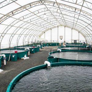 Fish Farming Done Responsibly