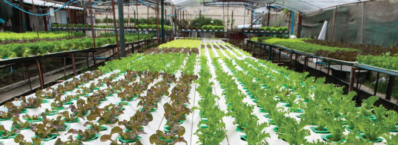 Can Aquaponics Help Restore The US Aquaculture Industry? Part 1