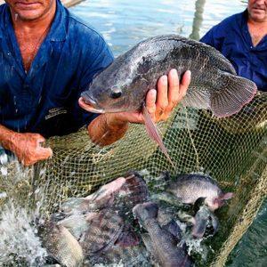 UAPB Plans Fish Sale; Proceeds Benefit Program