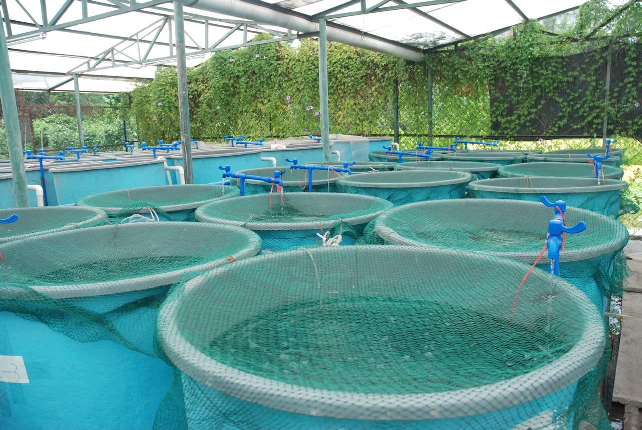 Aquaculture 7B47FD8474C2E