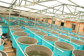 $2m Research Project To Make Aquaculture High Tech