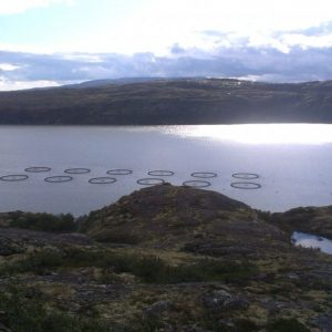 Russian Aquaculture Buys Its Second Norwegian Company, Aims For Big Catch Along Barents Sea Coast