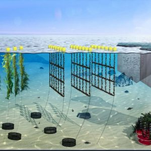 Bellona Solutions For Sustainable Aquaculture