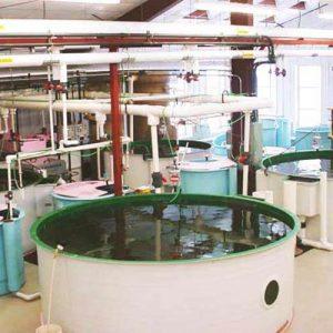 Aquaculture's Next Big Thing?