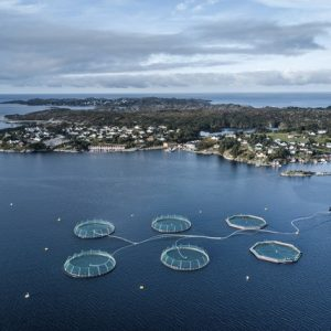 As Wild Salmon Decline, Norway Pressures Its Fish Farms