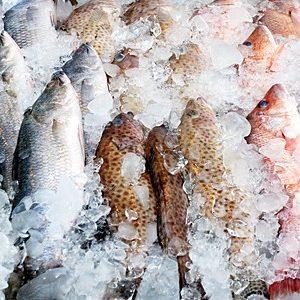 Fish Farming Startup AquiNovo Raises $1.5 Million In Seed Investment
