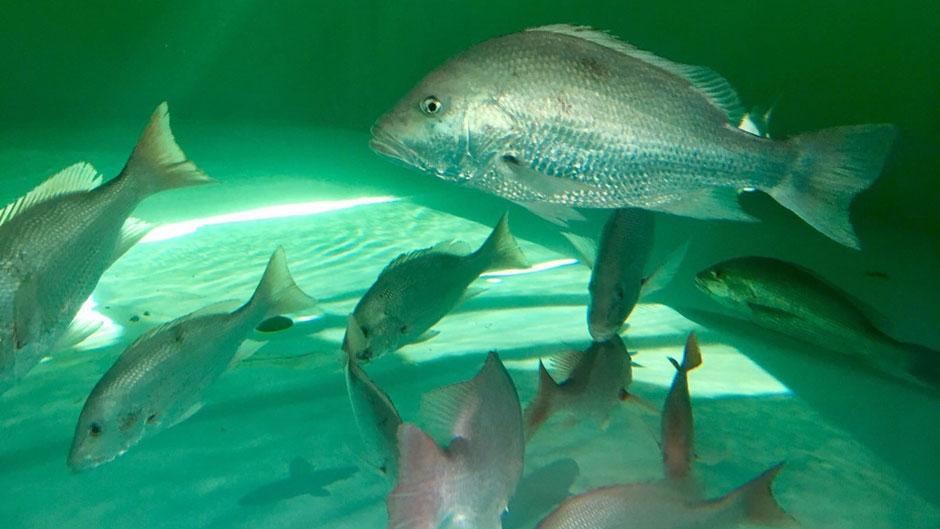 Aquaculture 940×529