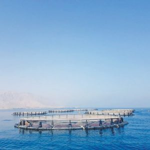 Aquaculture Project In Quriyat With 3,000 Tonnes Capacity Launched