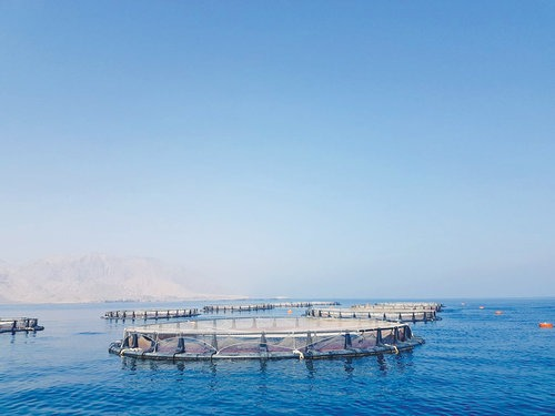 Aquaculture Project In Quriyat With 3 000 Tonnes Capacity Launched StoryPicture