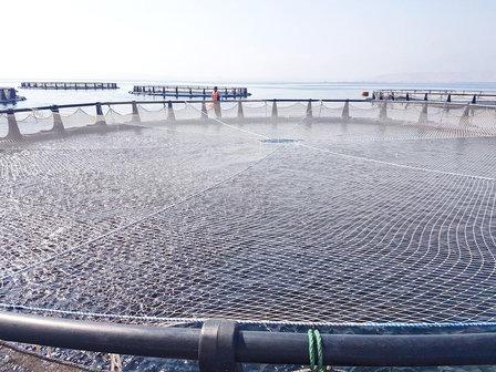 Aquaculture Quriyat1 Imagelarge