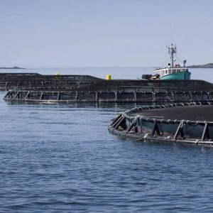 Tapping Into Global Markets For Canadian Farmed Fish And Seafood