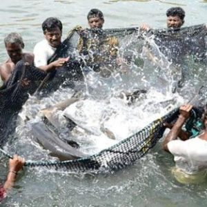 Reduce Role Of Middlemen In Aquaculture, Capture Fisheries:VP