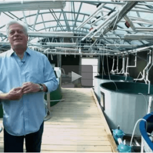 UM Scientist Awarded Grant Aimed To Increase Aquaculture Production In The US