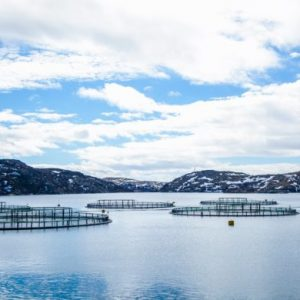 Russian Aquaculture Announces Princing Ofsecondary Public Offering Of Shares