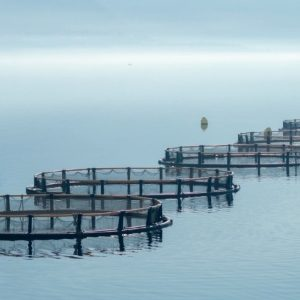 New Grant Program Could Increase Gulf Aquaculture