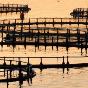 Making Science Count For Sustainable Aquaculture