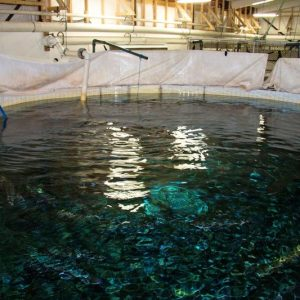Fish Out Of Water: Interest In Land-Based Aquaculture Grows
