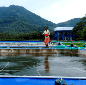 National Programme In Place To Monitor Aquaculture Diseases In India