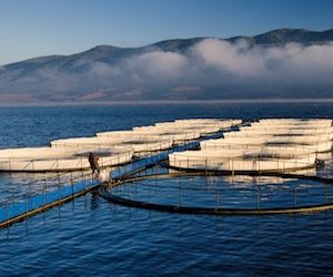 Organic Aquaculture Product Market Expected To Expand At A Steady CAGR Through 2025