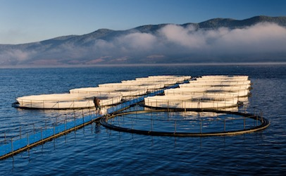 Fishfarm 406x250