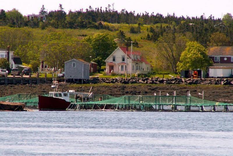 Salmon 2856973 Large