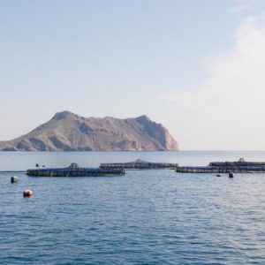 Top Gun Expands To Include Aquaculture Startups