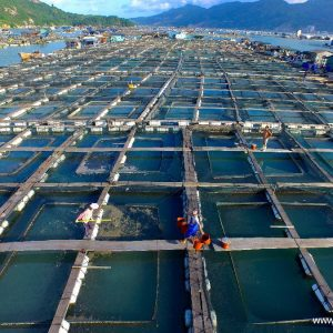 Aquaculture: How The Salmon Thrived In Norway's Robust Fish Farming Industry