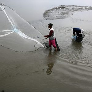 Shrimp Farmers Fully Insured Against Crop Failure In Jakarta
