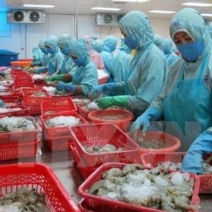 White Book On IUU Fishing In Vietnam Announced