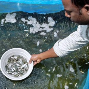 TS Aims At Self-sufficiency In Fish Seed Production In India