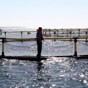 Seychelles To Restart Aquaculture Industry