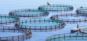 Global Aquaculture Market Will Grow At 5.0% CAGR To Exceed $ 209.42Bn By 2021