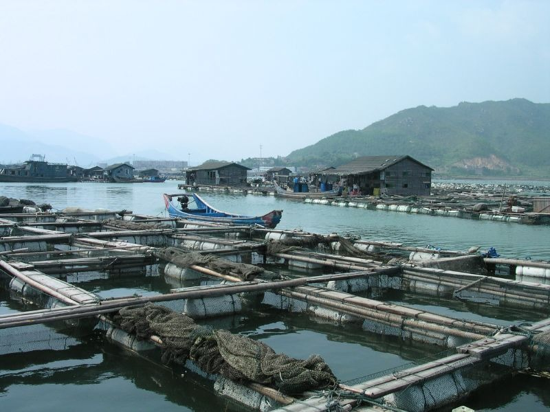 Aquaculture In Lo Nguong