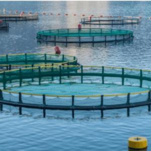 New Fish Farming Projects To Save Strategic Reserve In Qatari