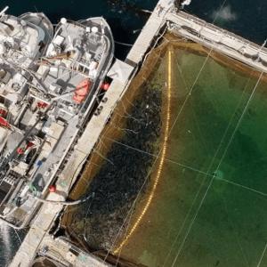 Inside DFO's Battle To Downplay A Deadly Farmed Salmon Disease