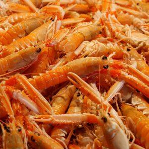 Hoosier Shrimp Farm