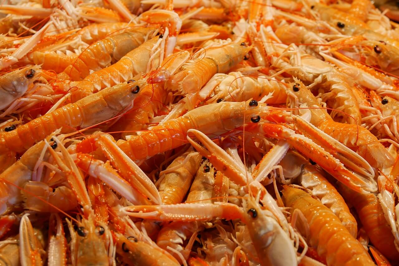 How NaturalShrimp Is Revolutionizing The Shrimp Aquaculture Industry 1
