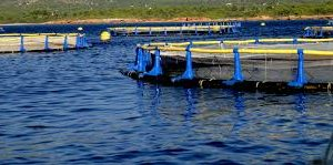 Aquaculture Business In Falmouth Wants To Expand Lease