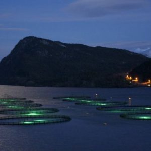 How Lasers And Robo-feeders Are Transforming Fish Farming