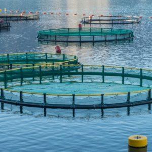 Swansea Uni Aquaculture Project Secures £1.4M