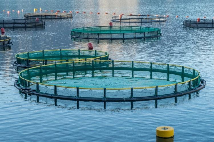 1517916468469.jpg–swansea Uni Aquaculture Project Secures  1 4m