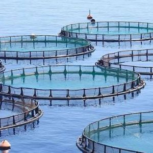 MME's Aquaculture Department Aims For Self-sufficiency