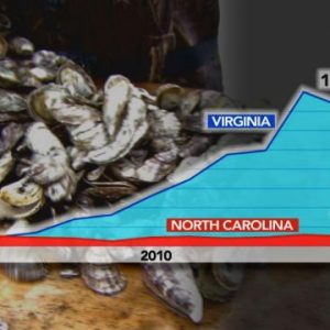Lab To Farm To Table: Science, Research Are Keys To Future Of NC Oysters