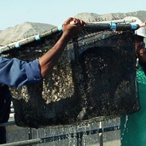 EXEO Capital Invests In SA Aquaculture Company