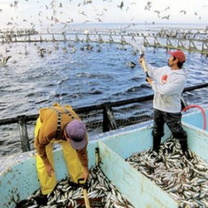 Morocco, Japan Want To Reinforce Fisheries Cooperation