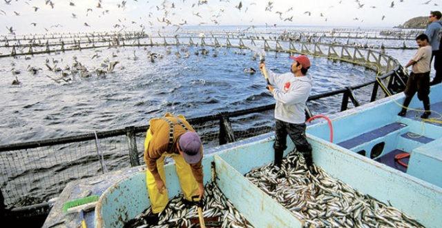 Aquaculture 640×331