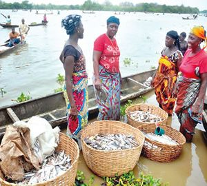 Aquaculture Experts Want Increased Tilapia Production To Boost Export